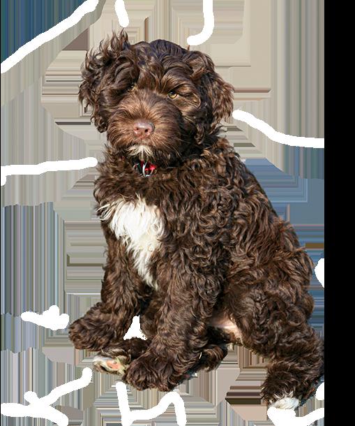 Portuguese Water Dog Foundation, Inc.